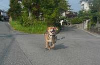 散歩20110730-5