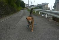 散歩20110731-2