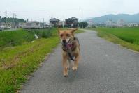 散歩20110731-3