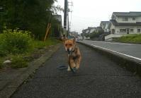 散歩20110823-2