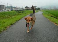 散歩20110823-4
