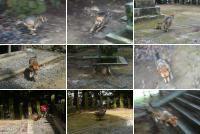 散歩20110824-1