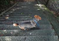 散歩20110824-2