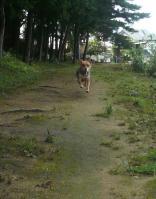 散歩20110824-3