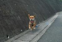 散歩20110825-2