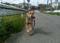 散歩20110825-3