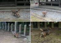 散歩20110827-3