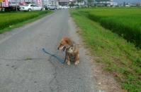 散歩20110828-3