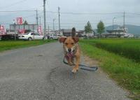 散歩20110828-4
