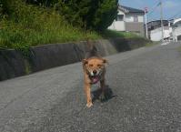散歩20110829-1