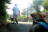 散歩20110829-2