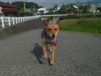 散歩20110829-3