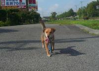 散歩20110829-4