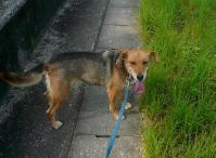 散歩20110829-5
