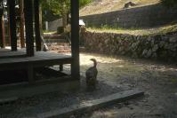 散歩20110830-2