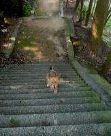 散歩20110830-4