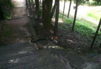 散歩20110831-1