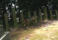 散歩20110831-2