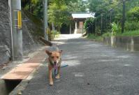 散歩20110831-5