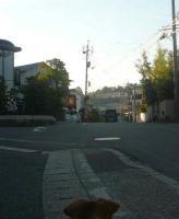 散歩20110924-3
