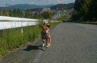 散歩20110925-1