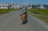 散歩20110925-3