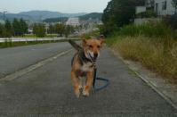 散歩20110926-1