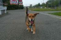 散歩20110926-2