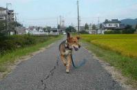 散歩20110926-4