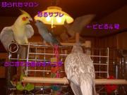 image184.jpg