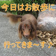 くっきー2