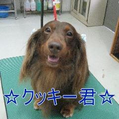 くっきー1