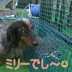 石川ミリー