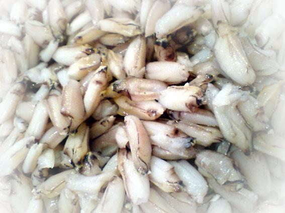 蝦蛄(しゃこ)爪