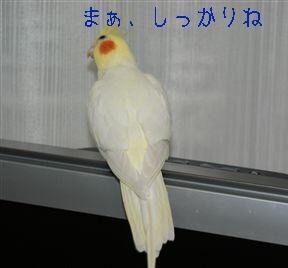 -1.jpg