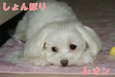 DSC01344_R.jpg