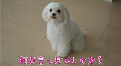 DSC01364_R.jpg