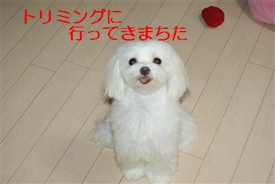 DSC01422_R.jpg