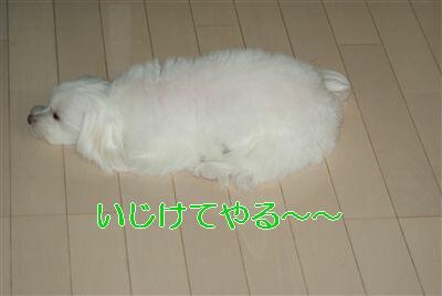 DSC01459_R.jpg
