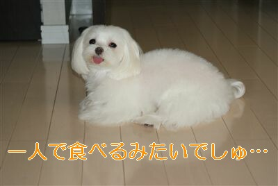 DSC01462_R.jpg