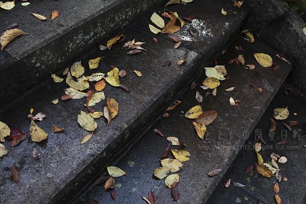 階段と落ち葉01