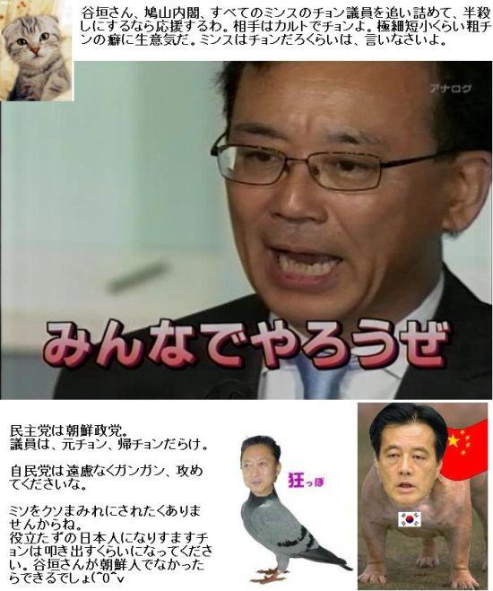 tanigakigo1.jpg