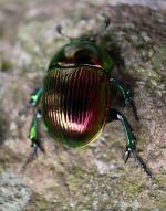 草虫 xusa  musi