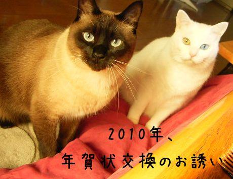 2_20091204105634.jpg