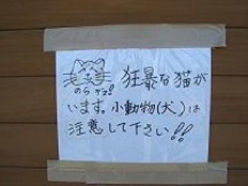 200px-オシンコシンの滝の猫4.JPG