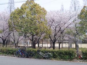 伽羅倶梨の前の芦原公園♪