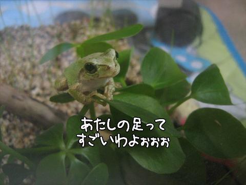 photokako12547334962982.jpg