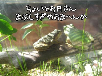 photokako125542463797012.jpg