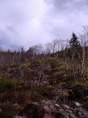 森林限界?