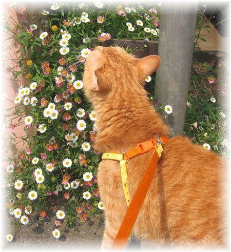 お散歩大好きだったボムボム
